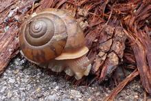 A snail!
