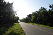 Wooded road in the morning.