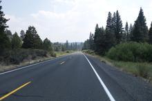 Pine forest roadside.